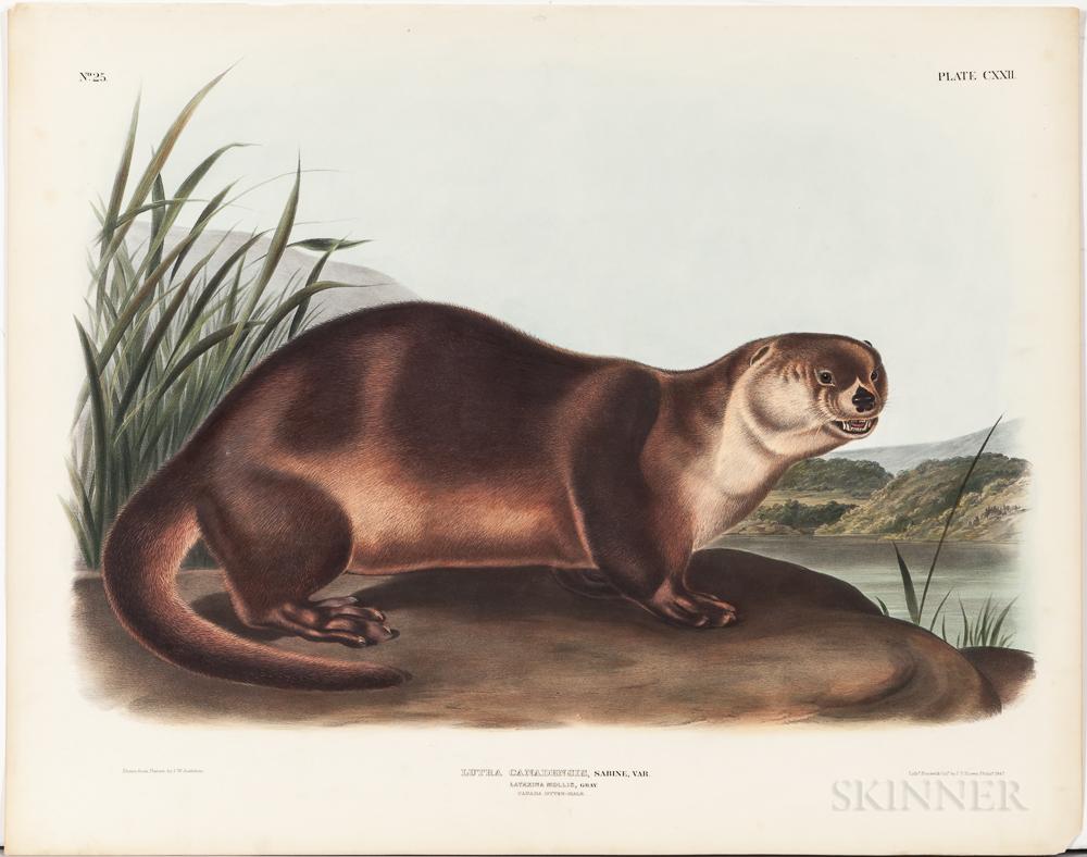 Audubon, John James (1785-1851) Canada Otter  , Plate CXXII.