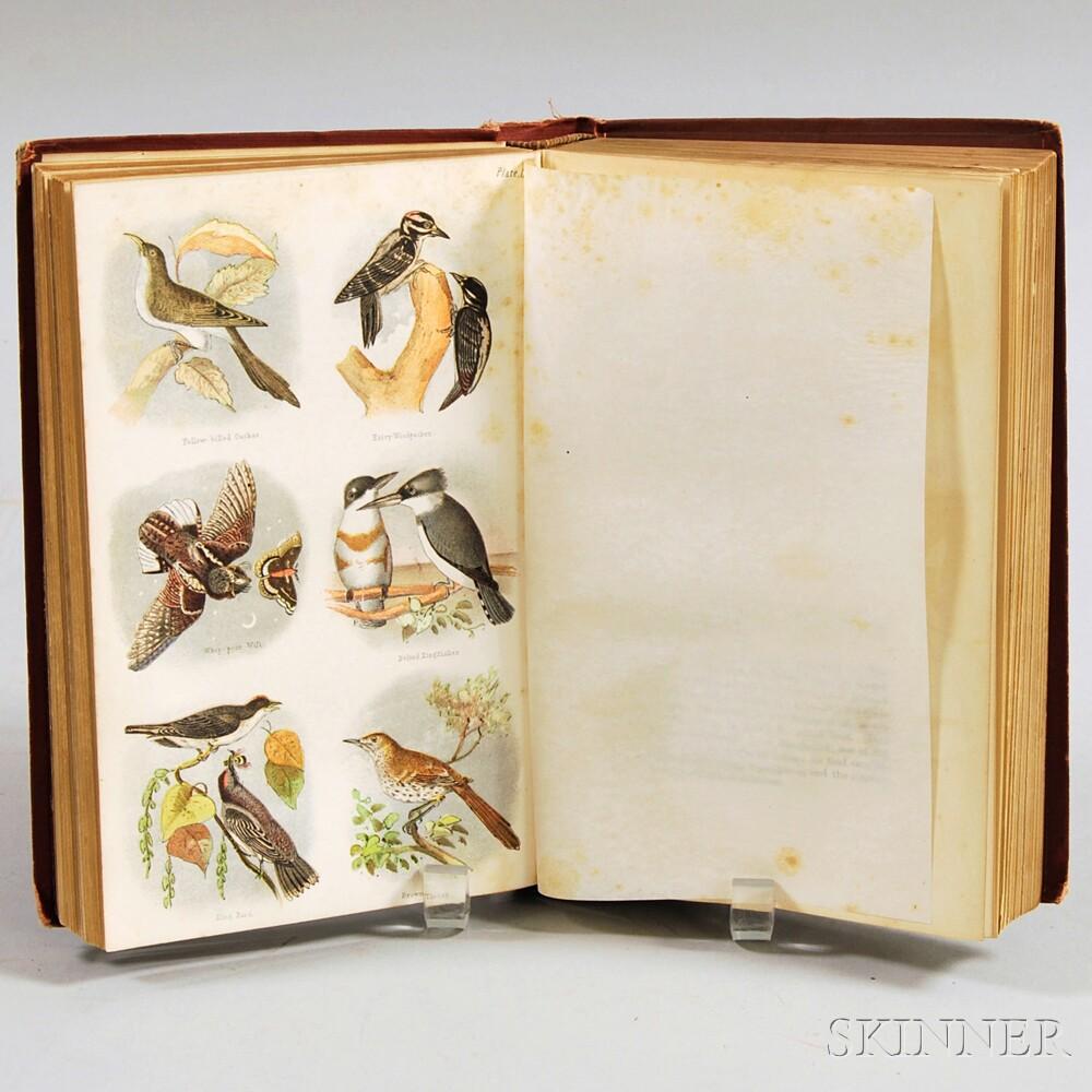 Samuels, Edward A. (1836-1908) Birds of New England.