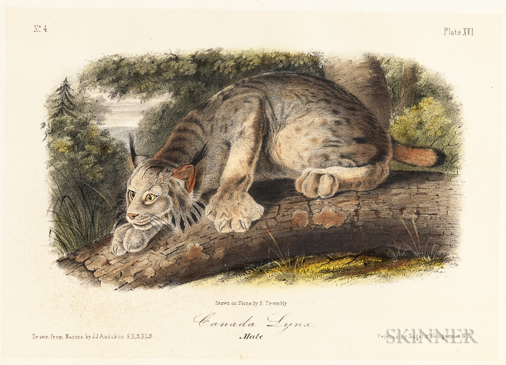 Audubon, John James (1785-1851) Five Quadruped Octavo Plates.