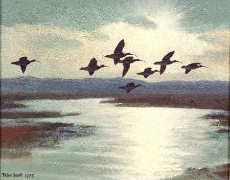 Sir Peter Markham Scott (British, 1909-1990)    Curlews at High Tide