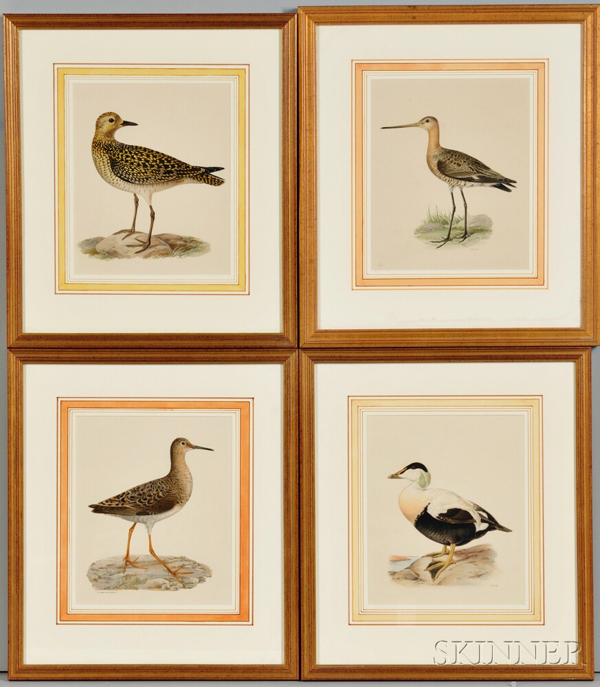 Set of Eight Framed Prints of Shorebirds