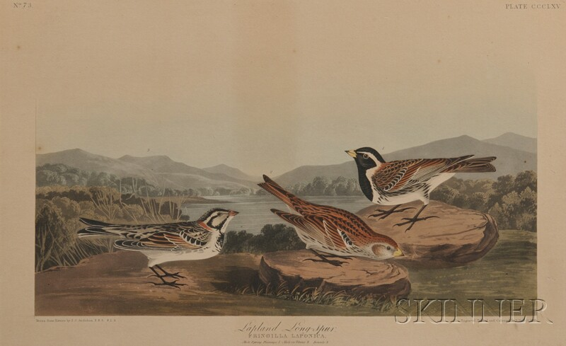 Audubon, John James (1785-1851) Lapland Long-spur