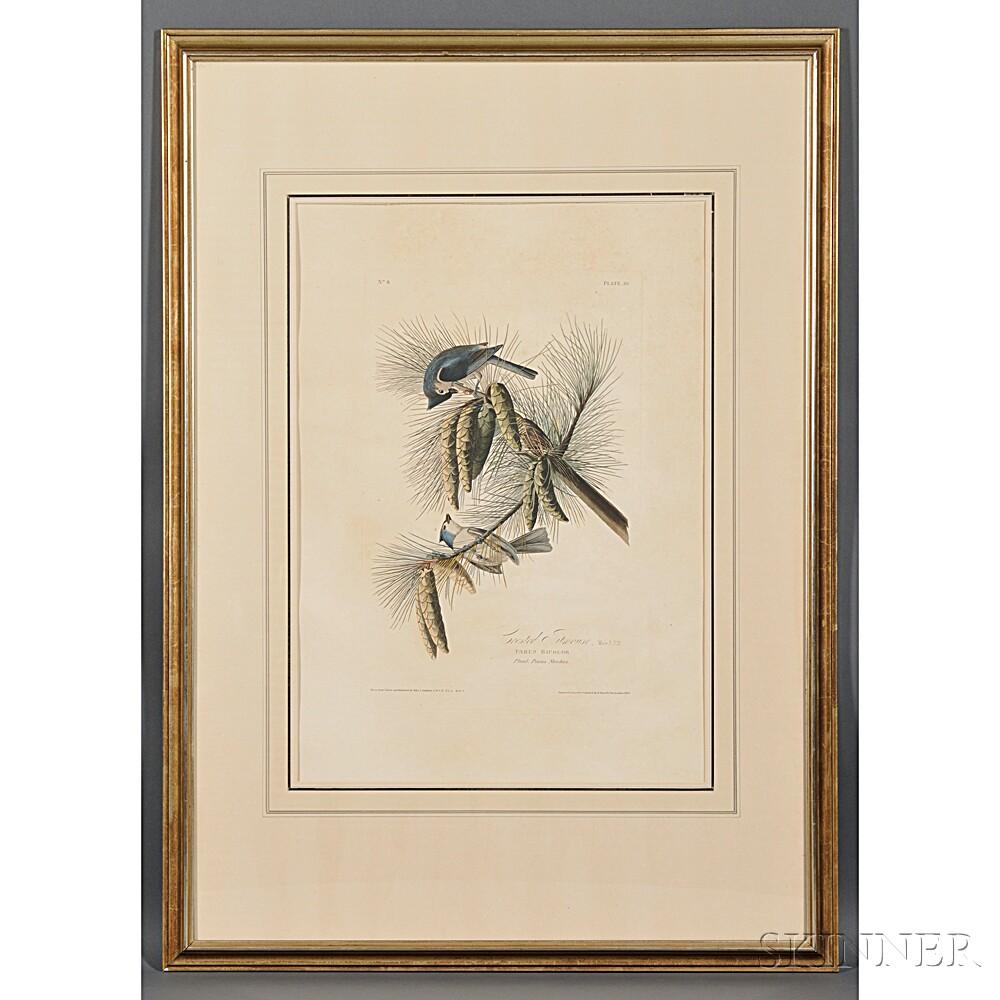 Audubon, John James (1785-1851) Crested Titmouse,    Plate 39.