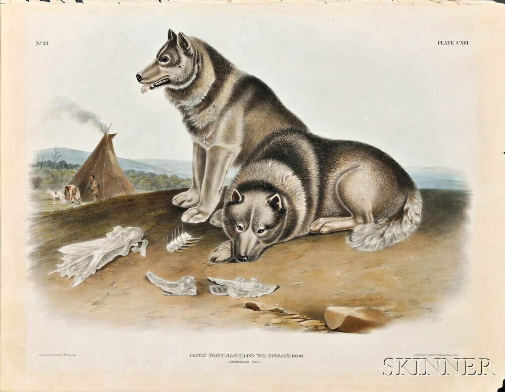 Audubon, John James (1785-1851) Esquimaux Dog  , Plate CXIII.