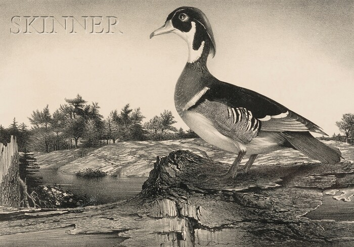 Stow Wengenroth (American, 1906-1978)      Wood Duck (Greenport, New York)