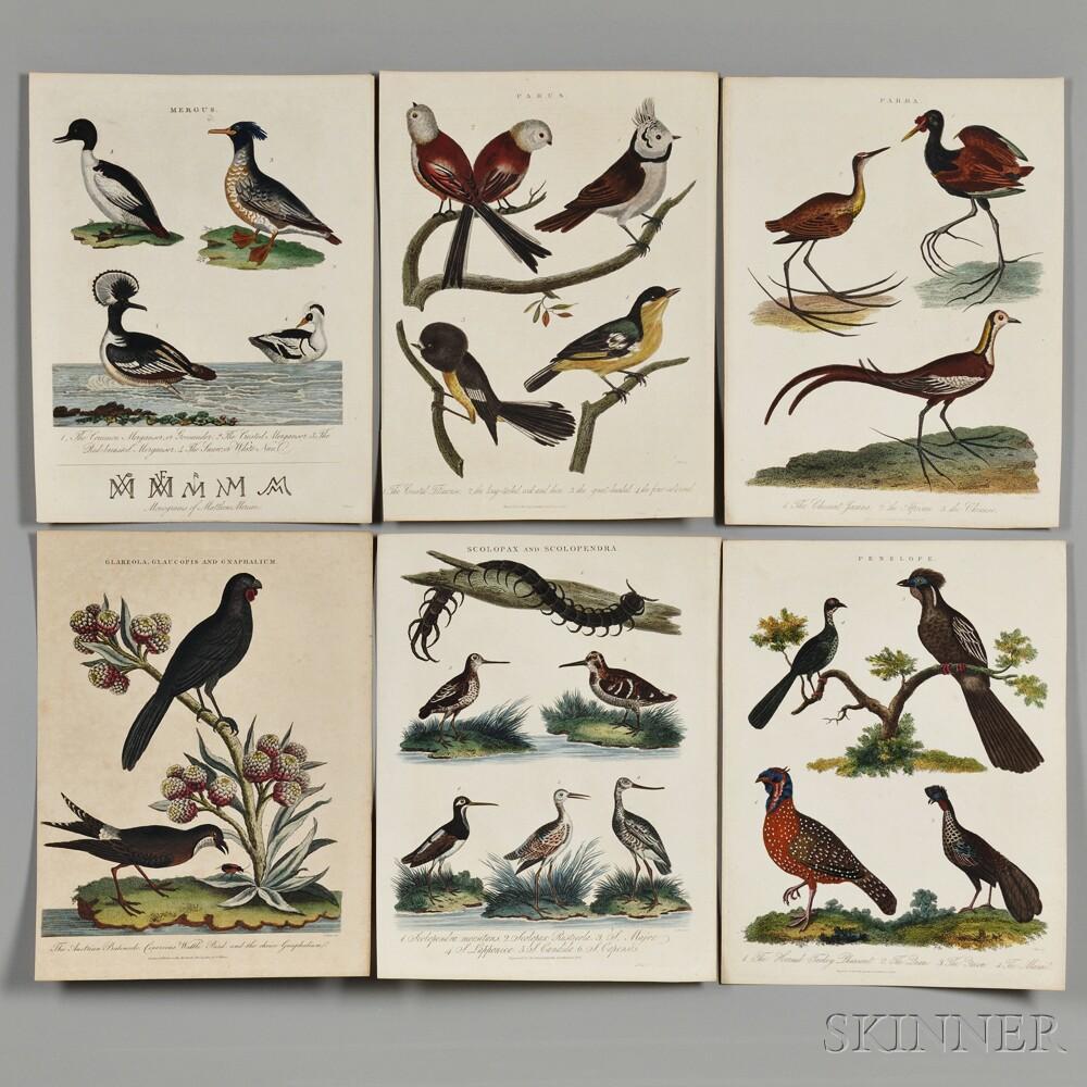 Bird Prints, Nineteen.