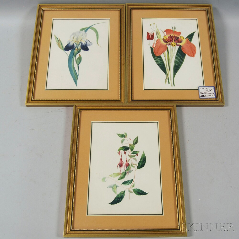 Three Framed 19th Century Botanical Watercolors