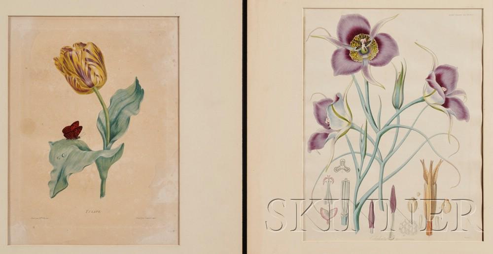 (Botanical Illustration)