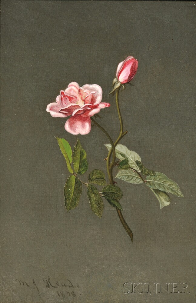 Martin Johnson Heade (American, 1819-1904)      Pink Rose