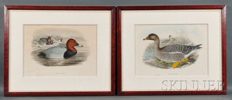 J. Gould & H.C. Richter, delineator and lithographer (American, 19th Century) Four Hand-colored Lithographs of Wild Fowl: SOMATERIA MOL