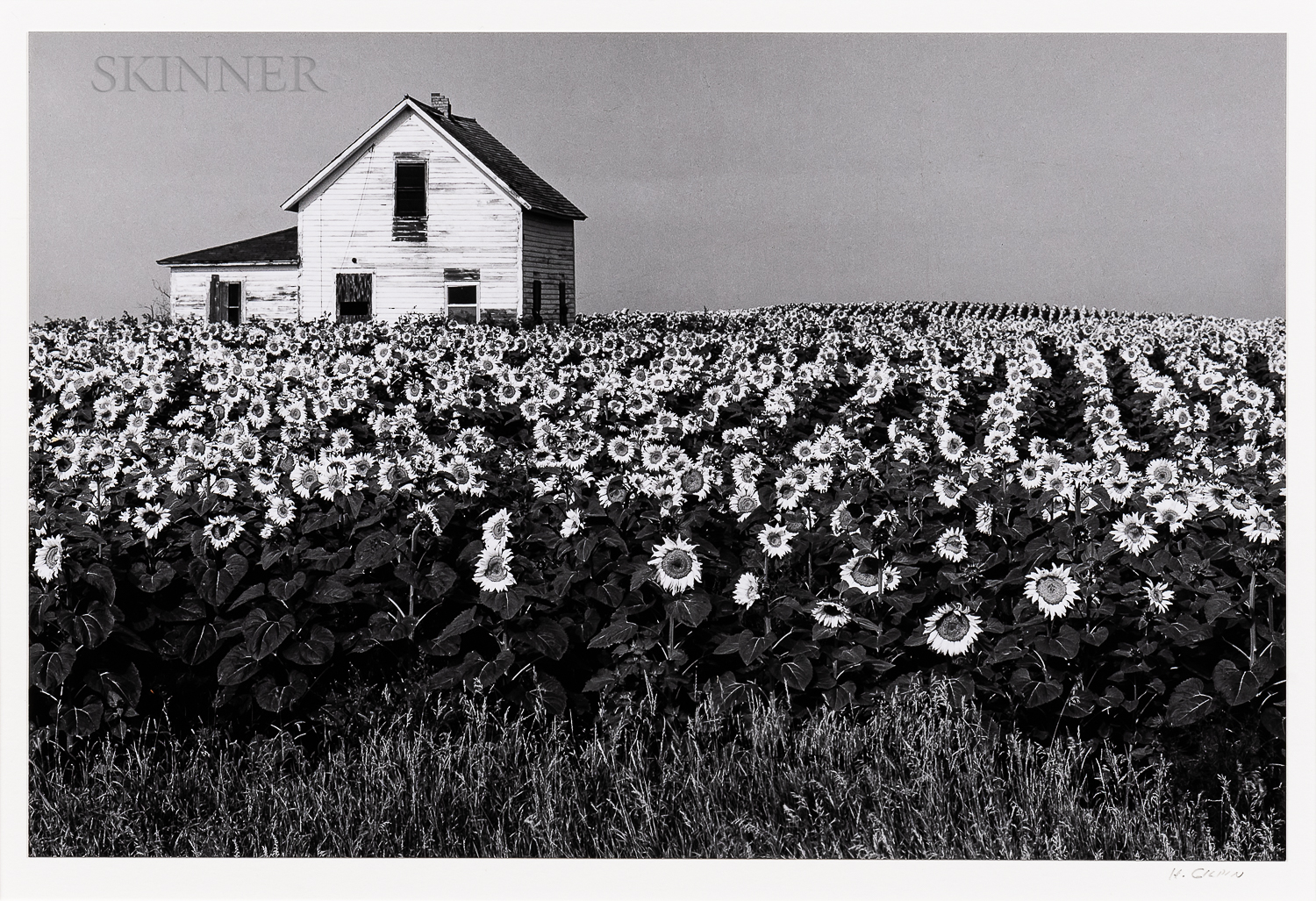 Henry Gilpin (American, 1922-2011)      Sunflowers
