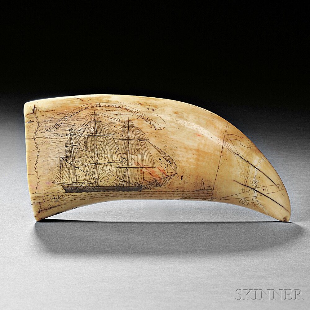 Scrimshaw Whale's Tooth Showing the Frances