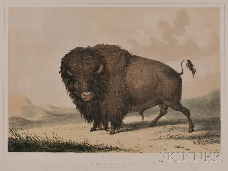 (Natural History, American West), Catlin, George (1796-1872)