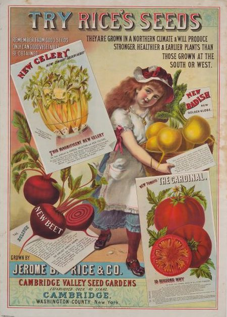 Jerome B. Rice & Co. Try Rice's Seeds   Chromolithograph Advertisement
