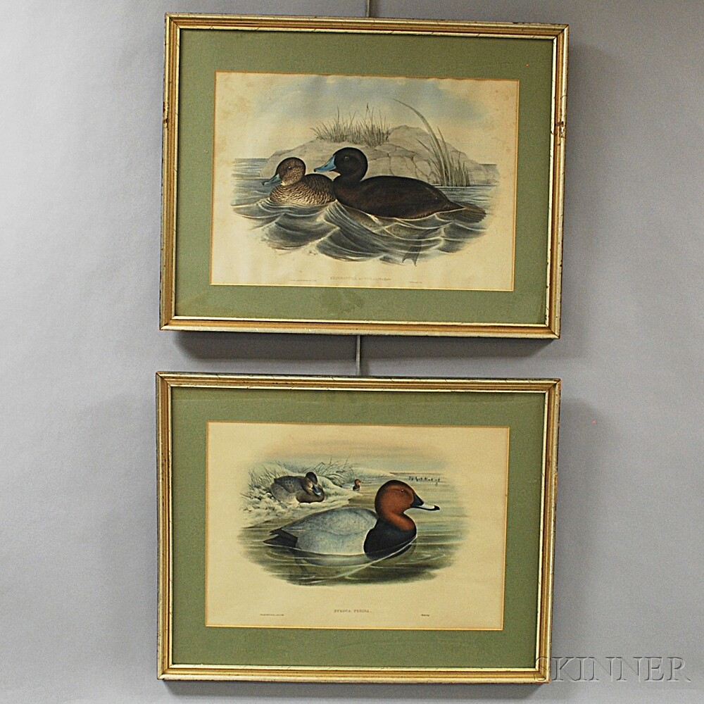 Two Framed Gould and Richter Hand-colored Duck Prints