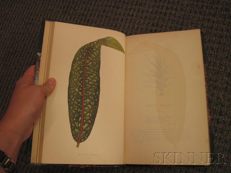 (Botanical), Lowe, Edward Joseph (1825-1900) and Howard, W.