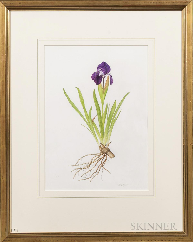 Victoria Goaman (British, b. 1951)      Two Works: Iris reticulata hybrid
