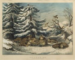 Currier & Ives, publishers (American, 1857-1907)  SNOWED UP.  RUFFED GROUSE IN WINTER.