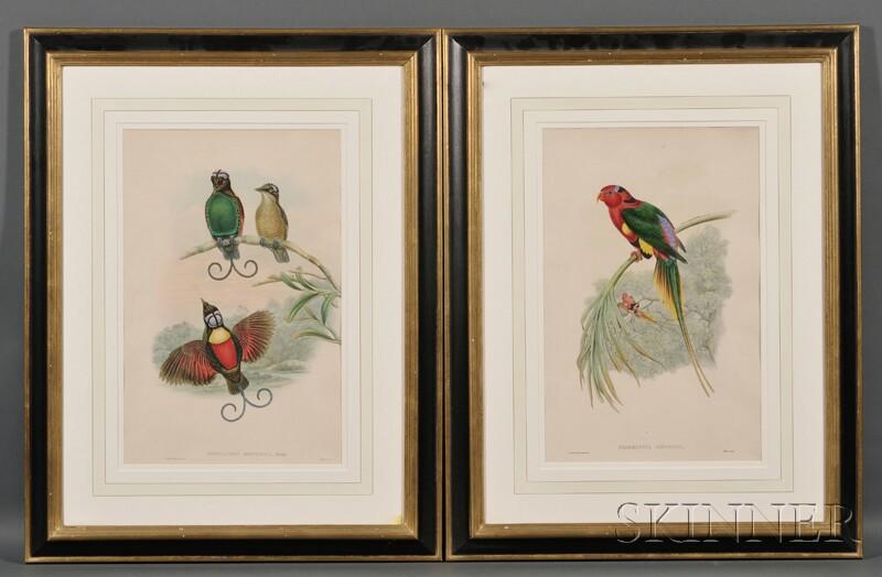 John Gould (English, 1804-1881), and William Matthew Hart (English, 1830-1908)       Two Framed Ornithological Lithographs