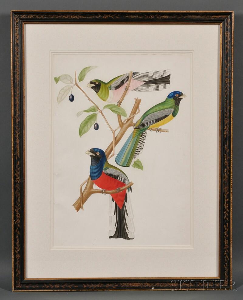 Framed Ornithological Chromolithograph