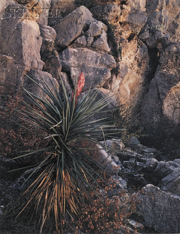 Four Photographs:      James Clinton Bones (American, b. 1943), Narrow Leafed Yucca