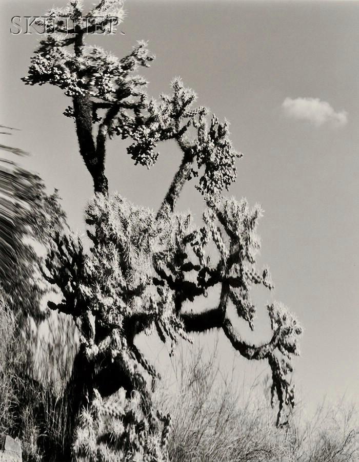 Elisabeth Sunday (American, b. 1958)      Two Images: Cholla