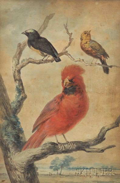 Continental School, 18th/19th Century      Ornithological Study.