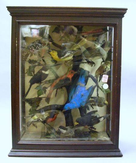 Late Victorian Fourteen Bird Diorama.