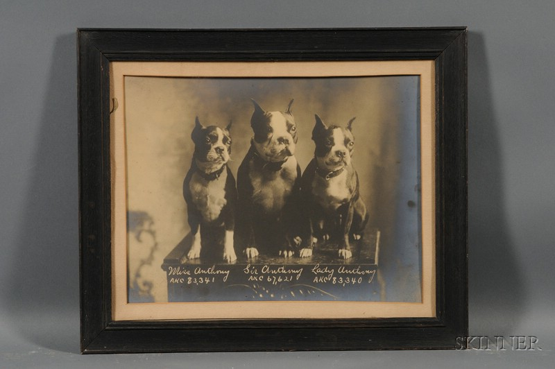 Framed Albumen Portrait Photograph of Three AKC Boston Terriers