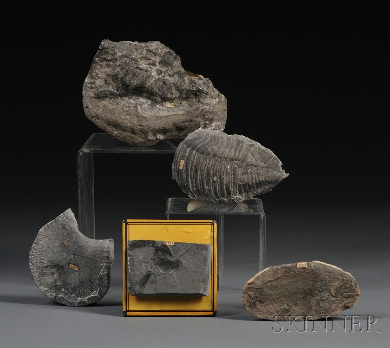 Collection of Five Fossils