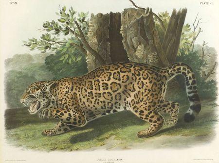 Audubon, John James (1785-1851)