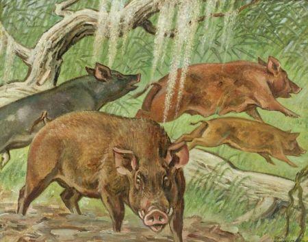 Paul Bransom (American, 1886-1979)  Wild Boar