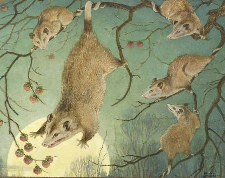 Paul Bransom (American, 1886-1979)  Opossum