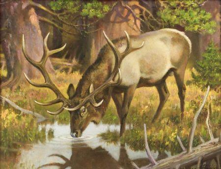 Paul Bransom (American, 1886-1979)  Bull Elk