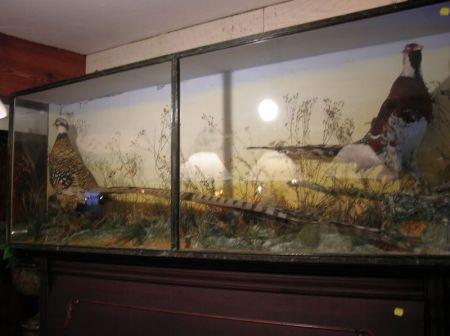 Late Victorian Wildlife Diorama