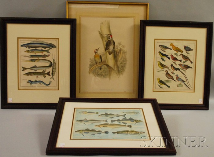 Four Framed Hand-colored Bird and Fish Prints