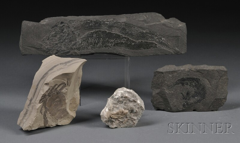 Four Fossils