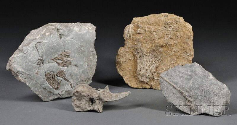 Three Crinoids and a Vertebra