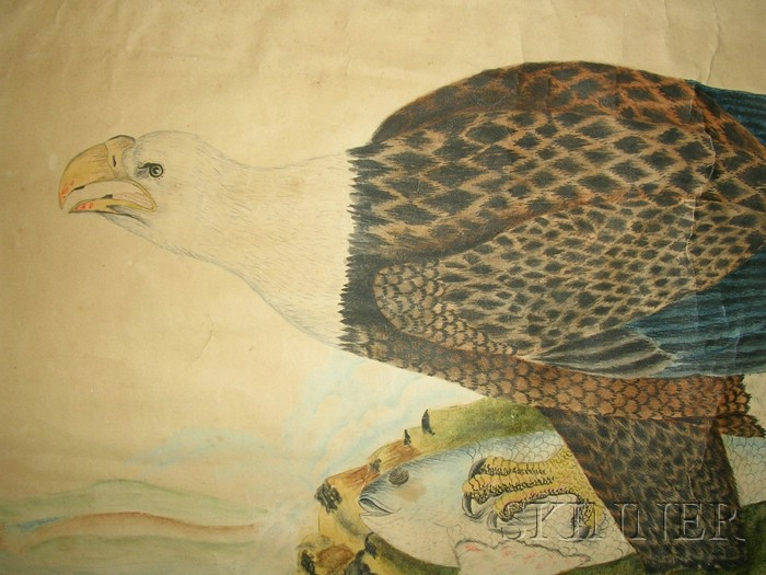 American School, 19th Century      Bald Eagle on a Mountaintop with a Fish.