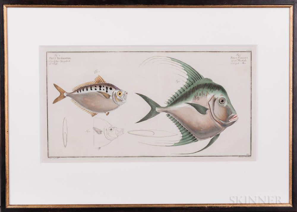Bloch, Marcus Elieser (1723-1799) Sixteen Fish Prints.