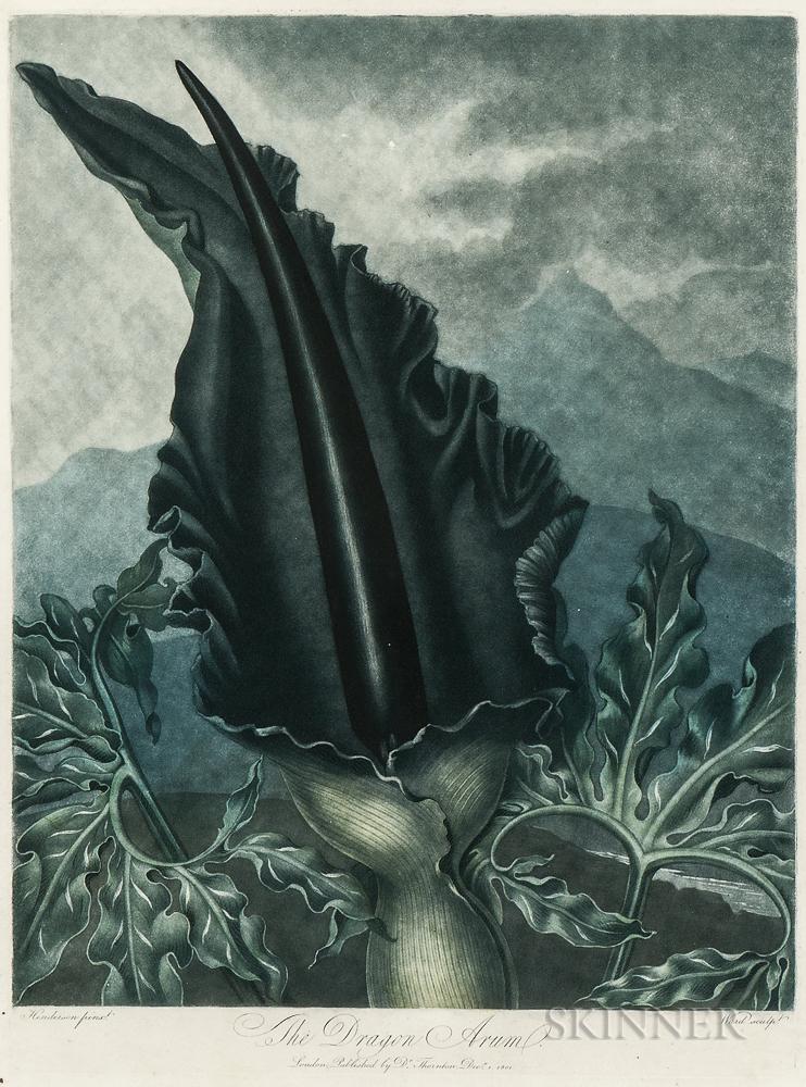 Robert John Thornton, publisher (British, c. 1768-1837)      The Dragon Arum
