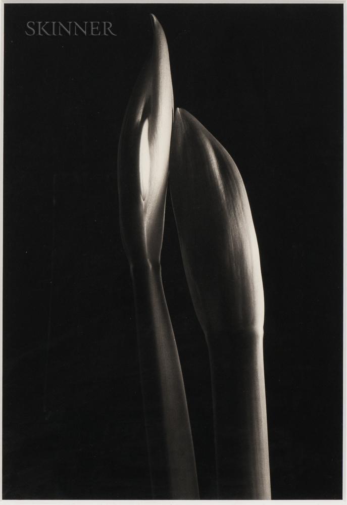 Kenro Izu (Japanese, b. 1949)      Still Life #607