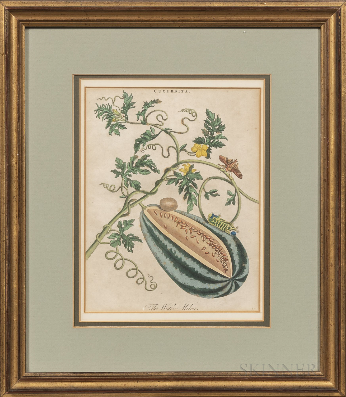 Two Late 18th Century Botanical Prints:      The Water Melon