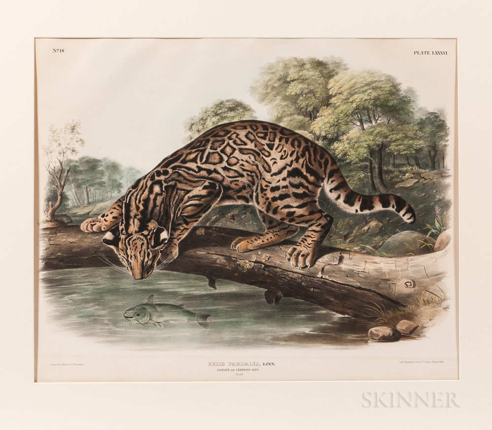 Audubon, John Woodhouse (1812-1862) Felis Pardalis, Ocelot, or Leopard-Cat  , Plate LXXXVI.