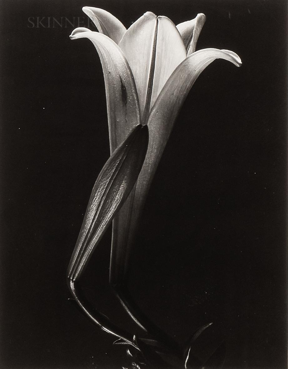 Tina Modotti (Italian, 1896-1942)      Easter Lily and Bud