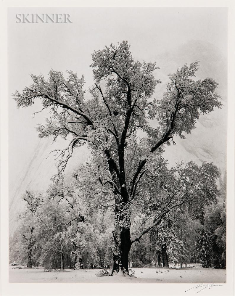 Ansel Adams (American, 1902-1984)      Oak Tree, Snowstorm, Yosemite National Park, California