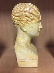 Molded and Polychrome Painted Plaster Phrenology Head