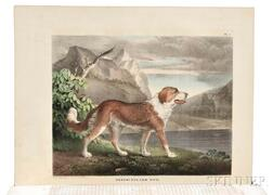 Doughty, John & Thomas (1793-1856) The Cabinet of Natural History and American Rural Sports with Illustrations.