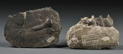 Two Fossils