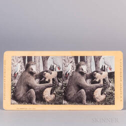 Stereoscopic Views and Cabinet Cards.
